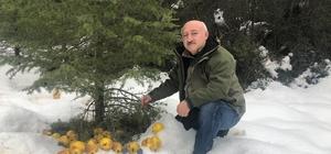 Antalya'da yaban hayatı kış yemlemesi Karla kaplı dağlara 2 ton elma, armut, şeftali, üzüm, erik, ayva, mısır ve buğday bırakıldı