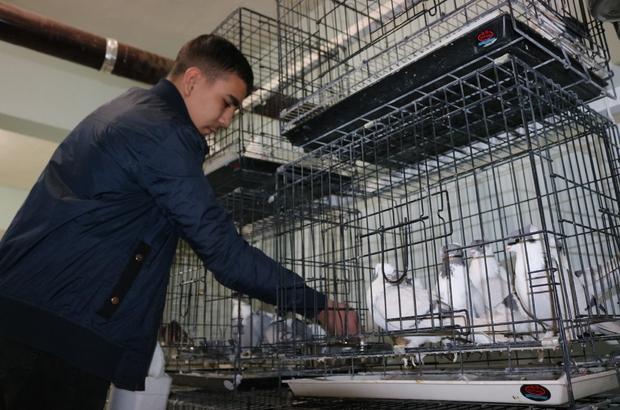 Diyarbakır'da üç bina güvercinler için otele çevrildi Değeri yaklaşık 50 bin lirayı bulan güvercinler için odalara soba ve klima yerleştirildi Güvenlik için bekçilerin de tutulduğu otel, güvercin meraklılarının mekanı haline geldi