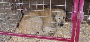 Hasta ve yaralı olan sokak hayvanları tedavi altına alındı
