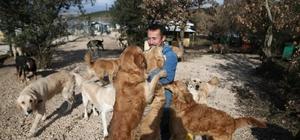 (Özel Haber) Sahipsiz köpek bırakmadı Bursa'da bir hayvansever kurduğu dernek sayesinde binlerce köpeği sahiplendirdi