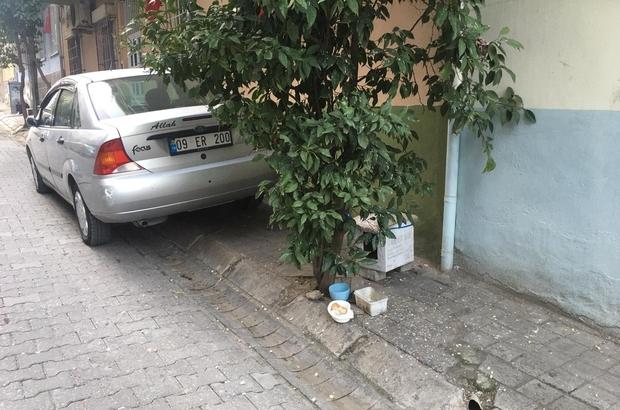 Aydın'da soğuk havada iç ısıtan görüntü