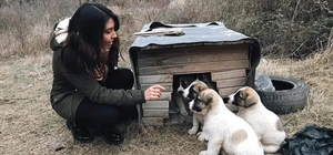 Aç kalan köpekler için topyekun seferberlik