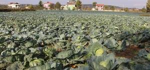 Karadeniz'in gıda ambarı Samsun Samsun bazı meyve ve sebze üretiminde ilk sıralarda yer alıyor