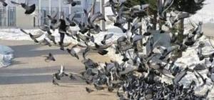 Her sabah kuşlar için yiyecek bırakıyor