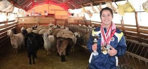Koyunları kovalayarak başladı, şimdi madalyaya doymuyor Sivas'ın Altınyayla ilçesinde çobanlık yaparak koşmaya başlayan genç sporcu, atletizm sporunda elde ettiği başarılarla ailesini gururlandırıyor