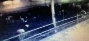 Deprem anında hayvanların panik anı kamerada