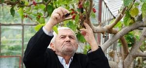 Kış ortasında dalından kırmızı dut yediler Sıcak hava kırmızı dutta erken hasat getirdi Antalya'nın Gazipaşa ilçesinde yaz meyvesi kırmızı dutlar olgunlaştı