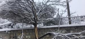 Yoğun kar çok sayıda ağacın kırılmasına neden oldu