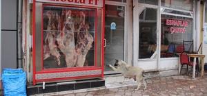 Kasabın kapısını patisi ile tıklayıp kemik istiyor Sivas'ın Zara ilçesinde bir sokak köpeği her gün gittiği kasabın kapısını patisi ile tıklayıp günlük kemiğini istiyor