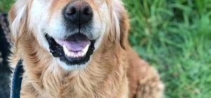 (Özel) Denizli'de bir garip köpek davası Kaybolan köpeğini bulan ve kendisinden bakım parası istenen sahibi olayı yargıya taşıdı Davada para istediği iddia edilen şahıs köpeğe veterinerlik masrafı olarak 800 TL ödediğini iddia etti Davaya konu olan köpeğin bir yerlere saklandığı iddia edildi