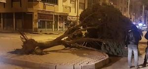 Şiddetli rüzgar ağacı yerinden söktü