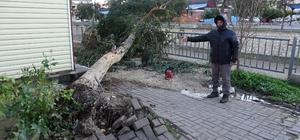 Rüzgarda ağaçlar yıkıldı, yıkılma riski olanlar budandı Mersin'in Erdemli ilçesinde kuvvetli rüzgar etkili oldu