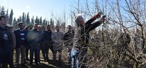 Meyve ağaçlarında budama eğitim seferberliği