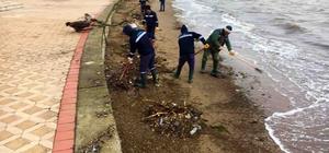 Başiskele sahilinde temizlik