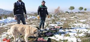 Başiskele'de sokak hayvanlarına yardım eli