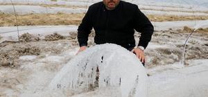 Karpuz tarlalarını buz kesti Karpuz fidelerini don vurdu Adana'da yaşanan don tarladaki suları dondurup demiri buz tutturdu Karpuz üreticisi Nadir Akol, ilk defa böyle bir afet gördüğünü söyledi