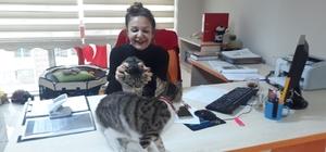 Sokaktan bulduğu kedilerini ofiste besliyor, çalışanlarını hayvan sevgisi olanlardan seçiyor Antalyalı serbest muhasebeci kadın ofisini kedilere açtı Bir kediyle başladı dört kediyle devam ediyor