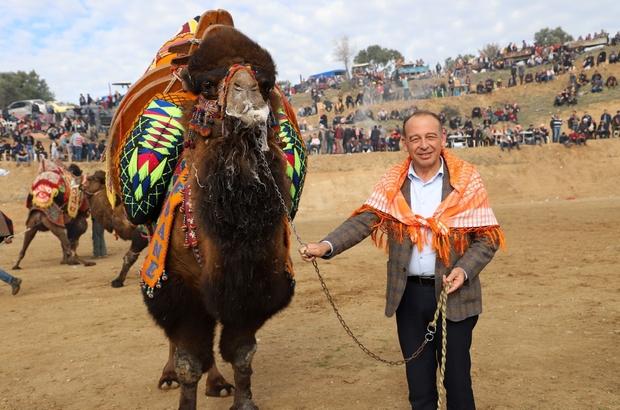 Turgutlu Belediyesi geleneksel deve güreşlerine hazırlanıyor