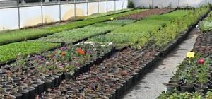 Aromatik bitki yetiştiriciliği kursu başvuruları başlıyor
