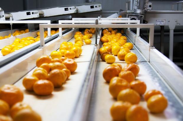 Ege'den taze meyve sebze ihracatında yüzde 68'lik artış Domates ihracatta rekor kırdı, Rusya'ya kota doldu ihracatçı kotanın kaldırılmasını istiyor