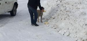Kar savaşçılarının yolunu köylüler kadar sokak hayvanları da bekliyor