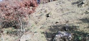 Zihinsel engelli yaşlı adam ormanda ölü bulundu