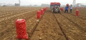 Adana'da dondu, Ödemişli üretici patatese yöneldi Bahar sezonu için patates ekimi yapacak üretici tohum bulmakta zorlanıyor
