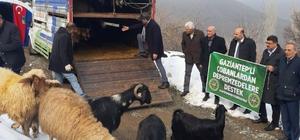 Gaziantepli çobanlardan depremzedelere anlamlı destek Topladıkları hayvanları Malatya'Ya gönderdiler