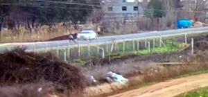 Çarpıp kaçtı, 15 yaşındaki çocuk hayatını kaybetti Otomobilin yayaya çarpıp kaçtığı kaza anı kameraya yansıdı
