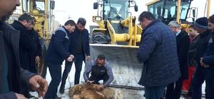 Kazasız belasız temizleyince, şükür kurbanı kestiler Sivas'ın Hafik ilçesi özel idare ekipleri yoğun kar yağışı nedeni ile kapanan tüm köy yollarını kardan temizleyince şükür kurbanı kesti