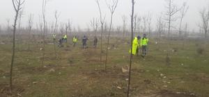 Büyükşehir'den Yukarı Hereke'de ağaçlandırma çalışması