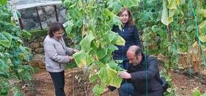 Aydıncık'ta çiftçilere serada sebze hastalıkları eğitimi