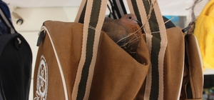 Züccaciye dükkanın önüne asılan çanta kuşların yuvası oldu Kuşların yuva yaptığı çantayı esnaf korumaya aldı