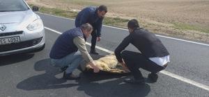 Yolda can çekişirken buldular Yaralı köpeği aracına alıp veterinerin yolunu tuttu