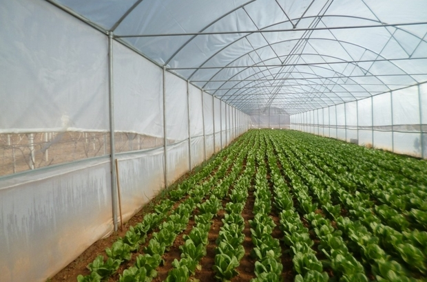 Manisa'da üreticileri sevindirecek gelişme