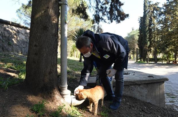 sokak hayvanlarına mama dağıtımı ile ilgili görsel sonucu