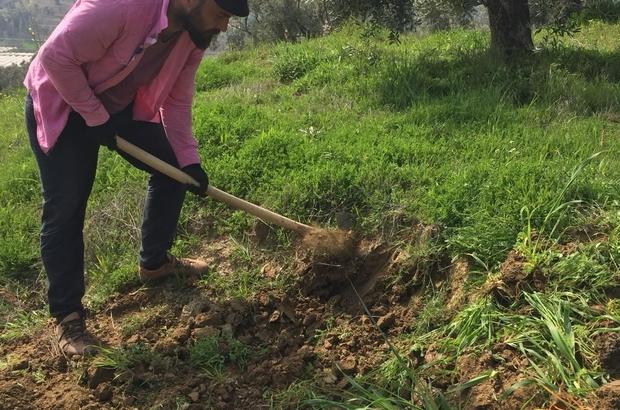 Yasakla birlikte, Aydın'da tarım arazilerinin çehresi değişti İş yerleri kapanınca vatandaşlar, tarım işlerine yöneldi