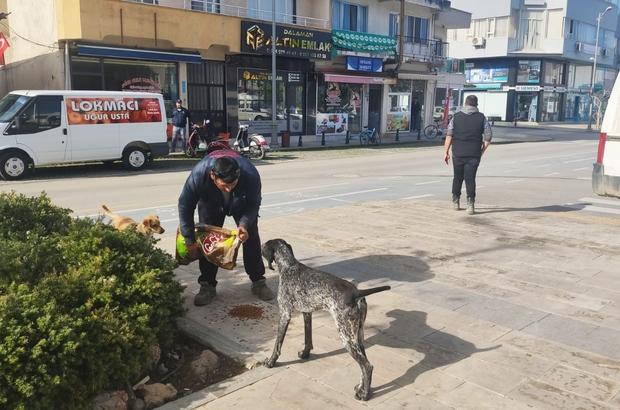 Dalaman Belediyesinden sokak hayvanlarına mama desteği