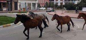 Tekirdağ'da Koronayı fırsat bilen atlar sokağa indi