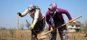Alternatif tarım ürünlerine kadın eli değiyor 'Ahududu ve böğürtlen' fidan desteğiyle kadınlara yeni gelir kapısı oluşturulacak Alternatif ürünlerle bölge ekonomisinin canlandırılması hedefleniyor