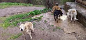 Topladıkları köpekleri, ormanlık alana bırakarak ölüme terk ettiler Ormanlık alana ölüme terk edilen köpeklere jandarma ve köylüler sahip çıktı