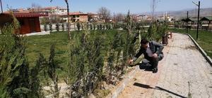 Çiçekdağı Belediyesi 10 bin fidanı toprakla buluşturmak istiyor