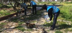 Korona günlerinde sokak hayvanları unutulmadı