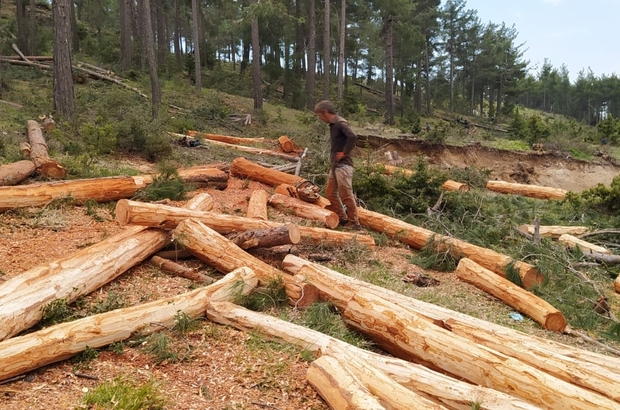Orman işçileri, yıkılan ağaçları ekonomiye kazandırıyor - Mersin ...