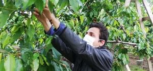 Mevsimlik işçilere Büyükşehir desteği