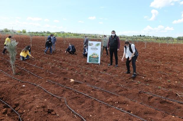 Çiftçilere sağlanan fideler toprakla buluştu Fidelerin ekimi konusunda çiftçiler bilgilendirildi