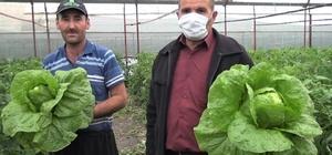 """Marul ve salatalık çiftçinin yüzünü güldürdü Üretici Mehmet Karadere, """"Çobanlık yapıyordum. Şu an seracılığa başladım. Bu işte kendi ekmeğimizi bulduk"""" diyerek memnuniyetini dile getirdi"""