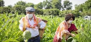Başkan Soyer, Çiftçiler Günü'nde sırtında küfeyle enginar hasadına katıldı