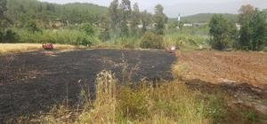 Seydikemer'de 4 dönüm buğday yandı