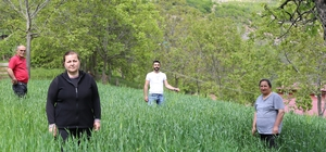 'Artvin buğdayı' coğrafi işaret yolunda Artvin'de döl buğdayı (Artvin Buğdayı) için coğrafi işaret alınması için çalışma başlatıldı.